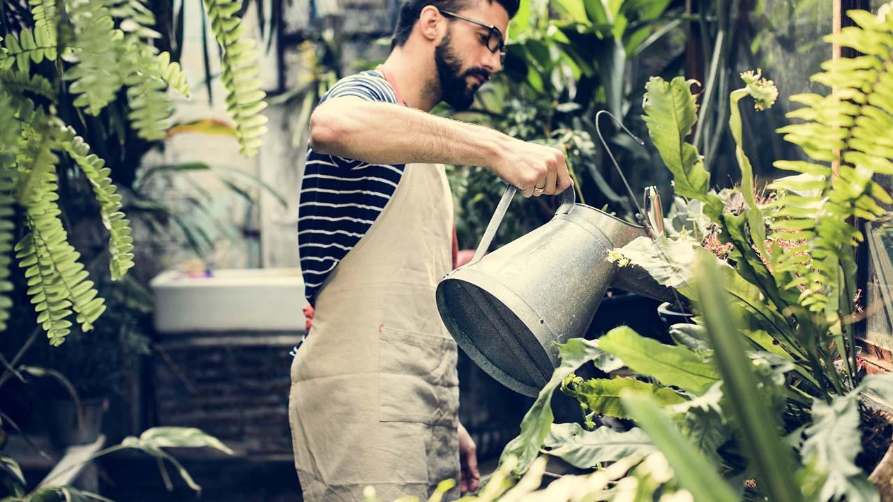 Zimmerpflanzen sind gut für das Raumklima - beim Gießen