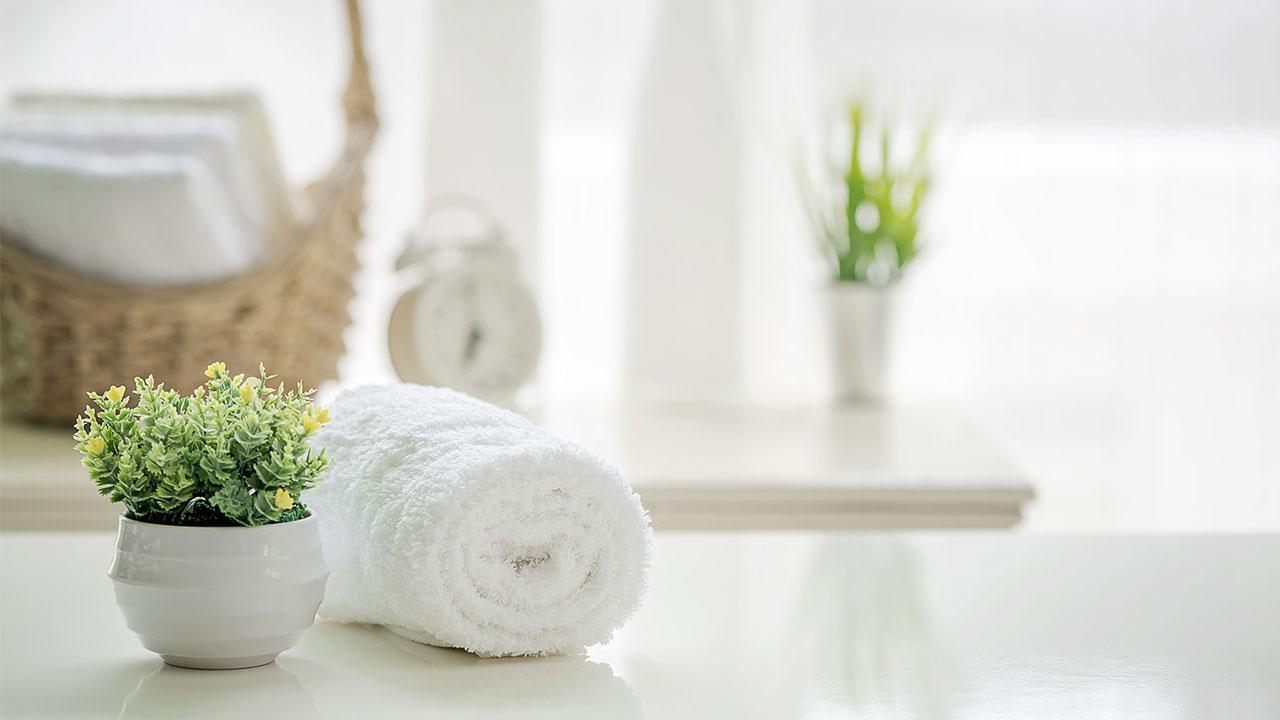 Zimmerpflanzen sind gut für das Raumklima - Pflanzen im Bad