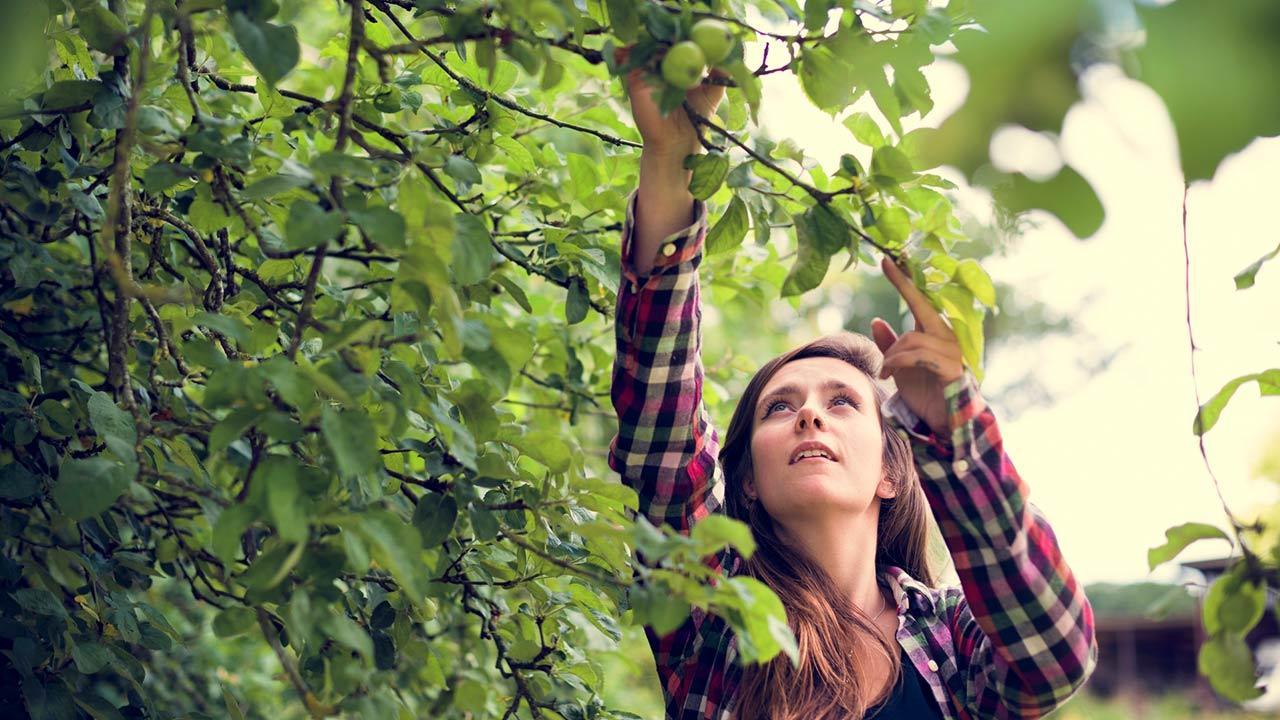 Wie pflanze ich einen Apfelbaum? / eine Frau pflügt sich einen Apfel