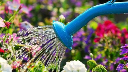 Garten bewässern im Spätsommer / bewässern mit einer Gießkanne