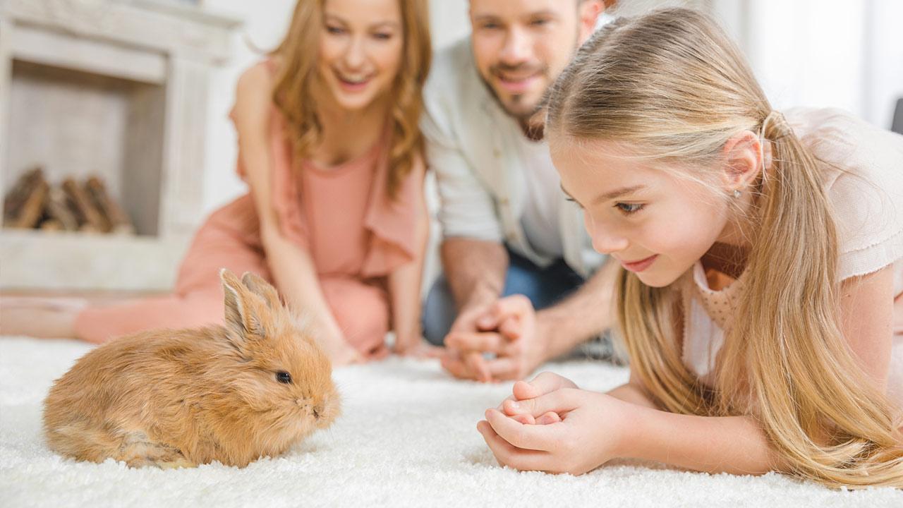 Ein Hase als Haustier / ein Mädchen mit einem Kaninchen