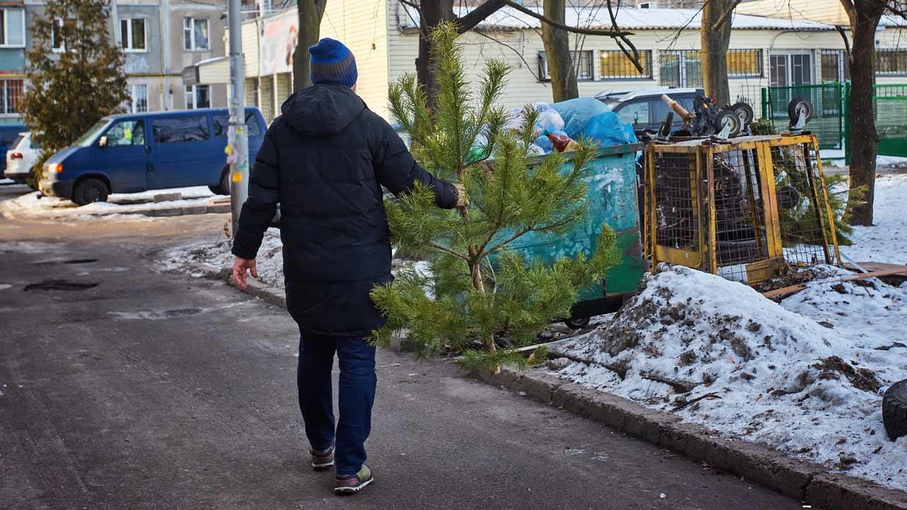 Wie entsorge ich meinen Weihnachtsbaum - auf den Müll