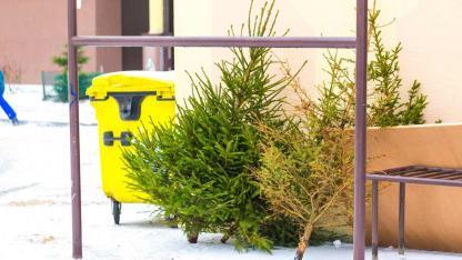 Wie entsorge ich meinen Weihnachtsbaum