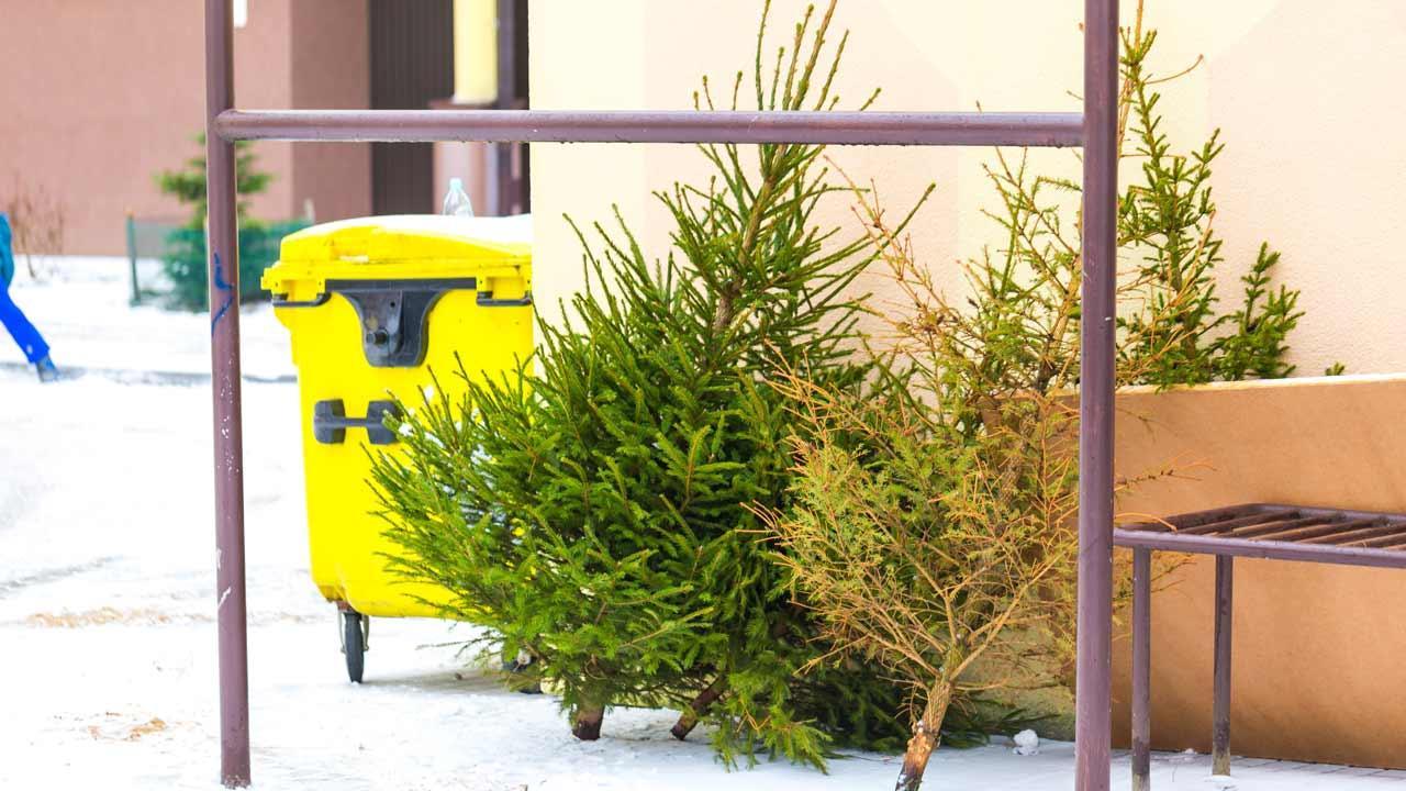 Wie entsorge ich meinen Weihnachtsbaum - am Müllplatz
