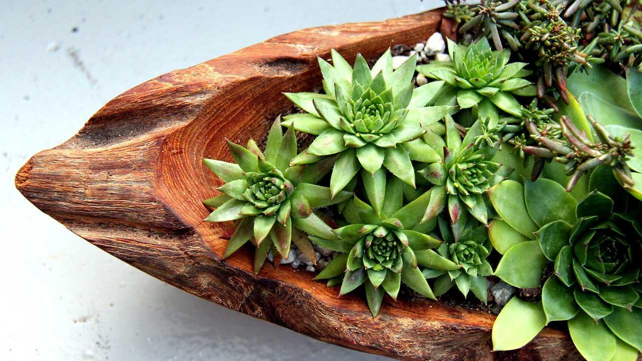 Pflegeleichte Zimmerpflanzen - Sukkulenten-Arragement