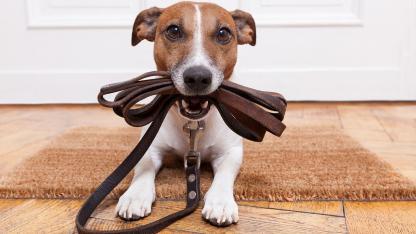 Vorteile der Laufleine für Hunde