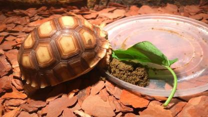 Was macht meine Schildkröte im Winter
