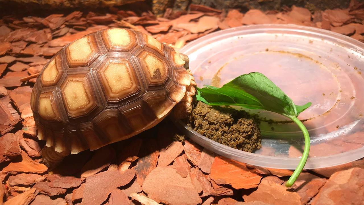 Was macht meine Schildkröte im Winter - Schildkröte schläft neben dem Futter