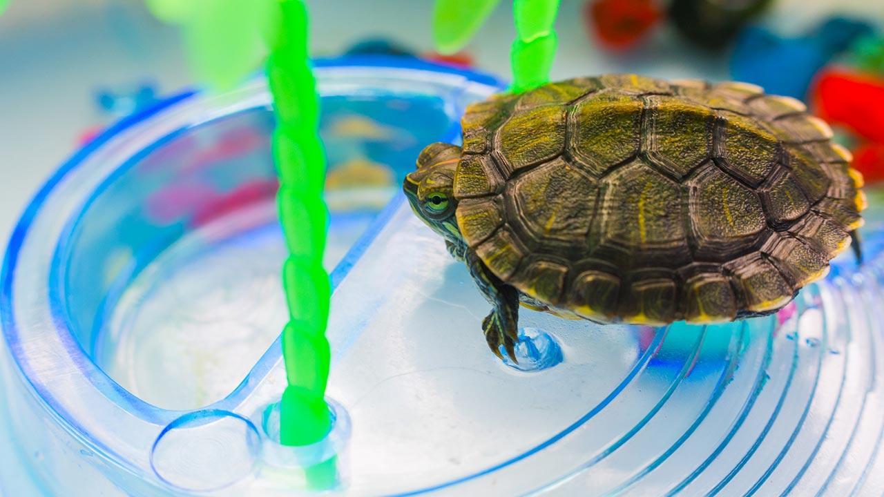 Was macht meine Schildkröte im Winter - Schildkröte im Aquarium