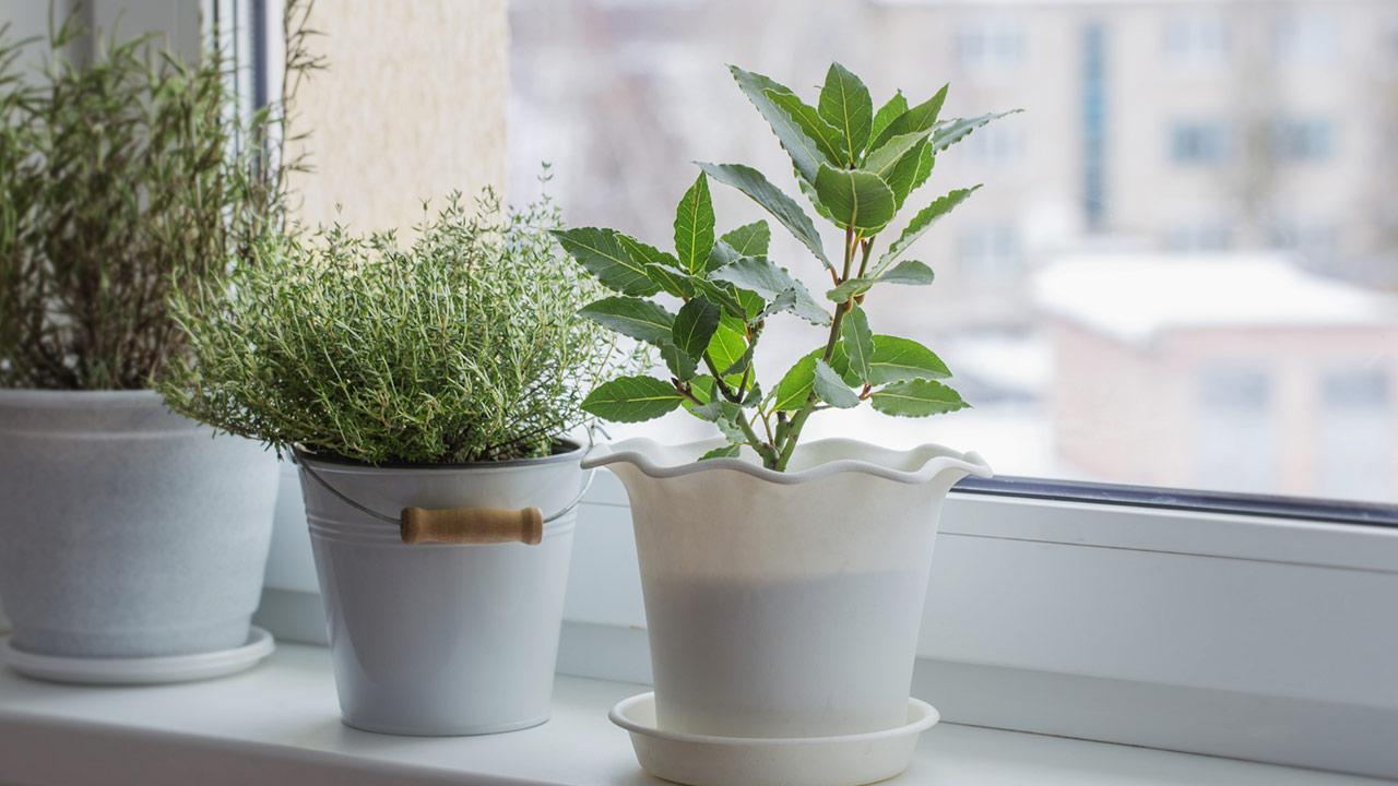 Kräuter im Haus Vorziehen - Kräuter am Fensterbrett